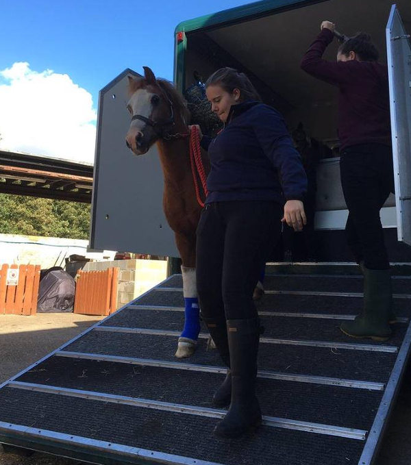 Horse return to farm