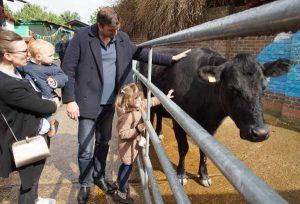 Vistors stroke farm cow