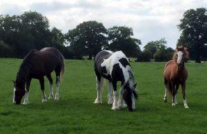The 3 farm horses