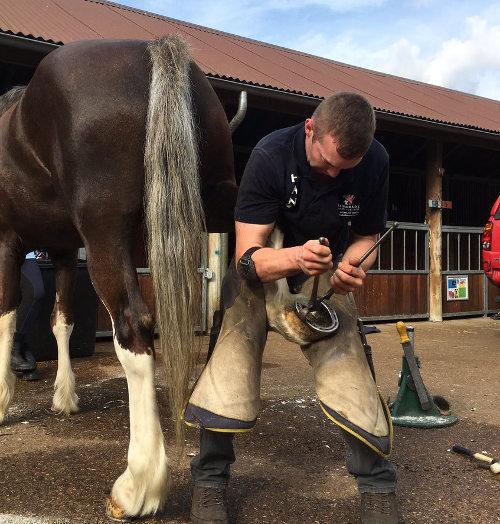 horse shodding 2017