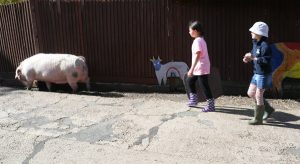 young farmers pig herding