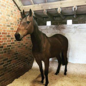 New horse arrives