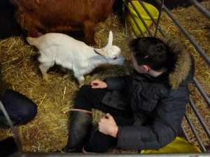young farmer and goat kid 2016