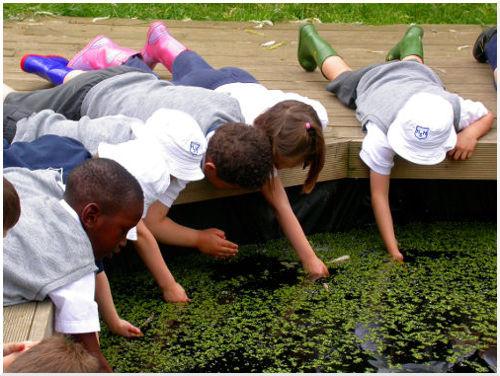 Children visit the farm wildlife pond