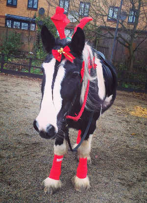 Murphy Christmas horse