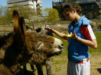 donkey and young volunteer