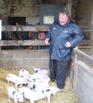 farm stockman John Langan with piglet litter