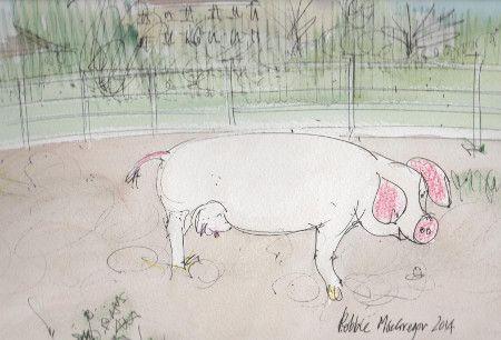 pig by artist Robbie MacGregor