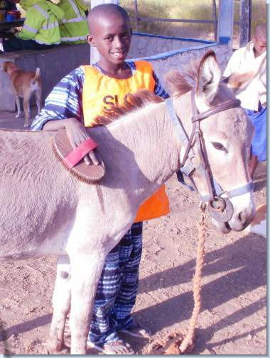 Donkey care in The Gambia