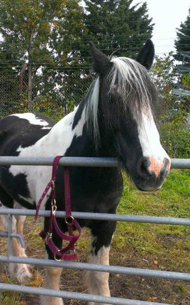 horses back at the farm 2015