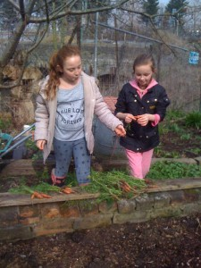 young volunteers planting carrots 2016