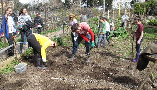 Volunteers prepare the ground for MIND garden