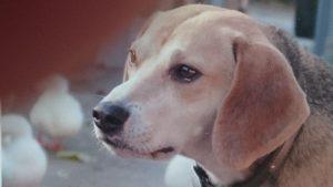 Farm dog Fred 2003 - 2016