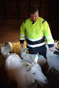 Volunteer Thomas working with the goats