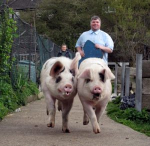 Volunteer Thomas herding the pigs