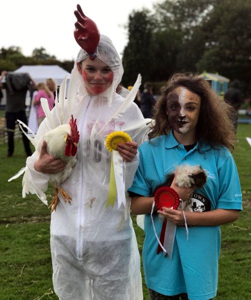 Hen and guinea pig look-a-likes