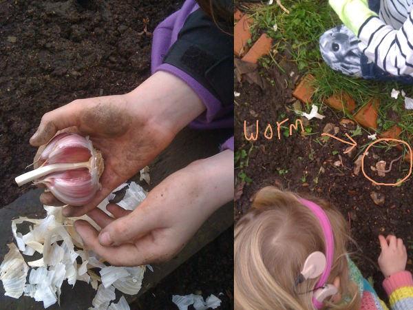Picking garlic & finding a worm
