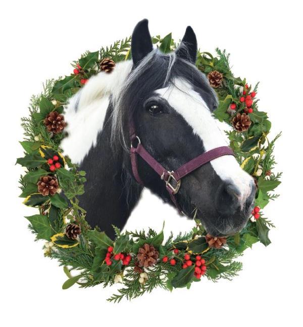 Farm horse Murphy 2017