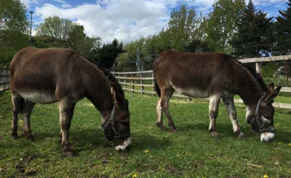 New donkeys in the field 2018