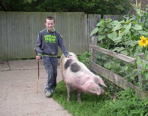 Young Farmer and farm pig