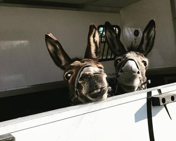 Donkeys Dora and Nora