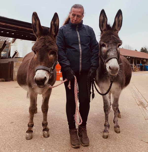 Farm Donkeys 2019