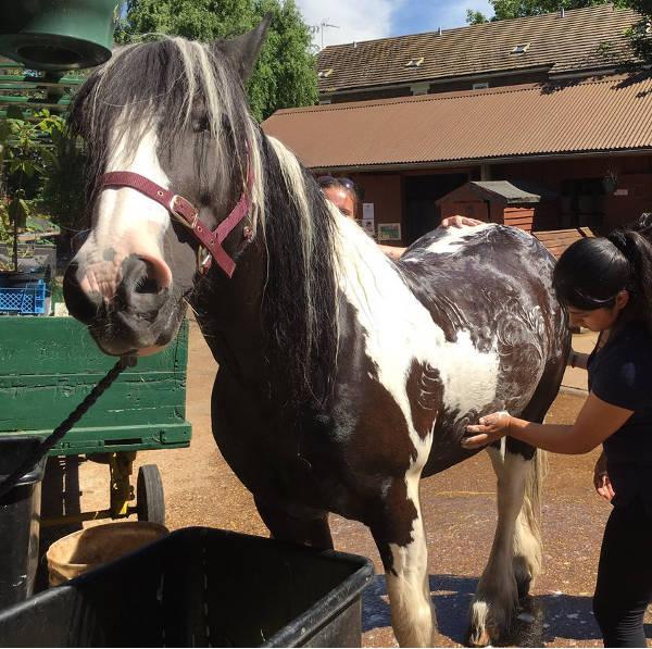 horse care skills