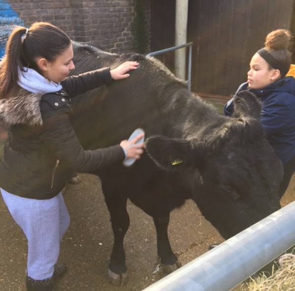 Animal care by young farmers