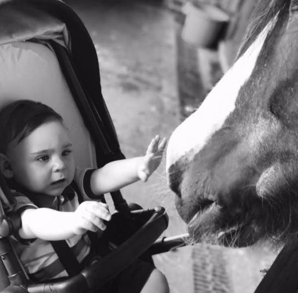 first meeting with horse