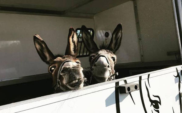 Donkeys arrive