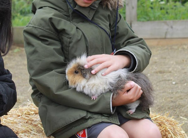 Children can handle our small animals on Animal Only visits