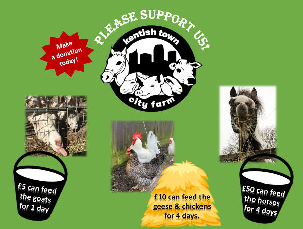 Costs of feeding the animals at Kentish Town City Farm