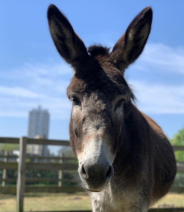 Donkey Nora
