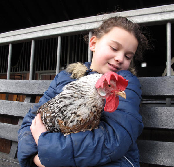 Child volunteer holding a farm chicken