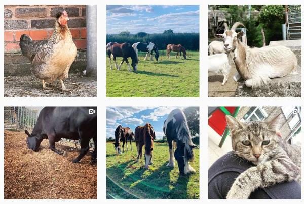 Farm animals summer 2020