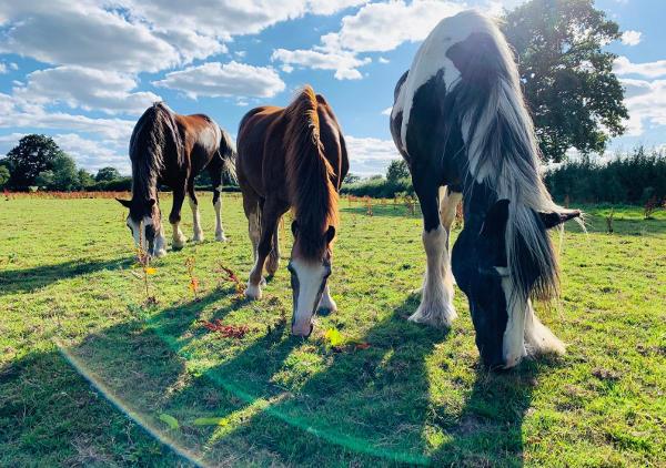 KTCF horses on holiday