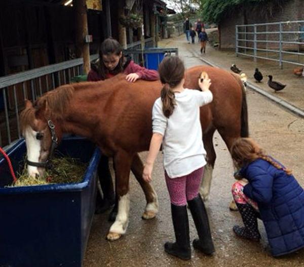 Three Pony Club members groom Jester the horse
