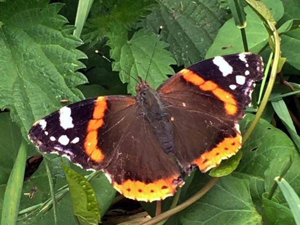 Butterfly in the Farm garden