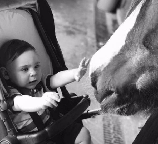 Baby reaches to stroke Farm horse