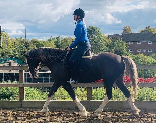 Pony club rider on Champion, the horse