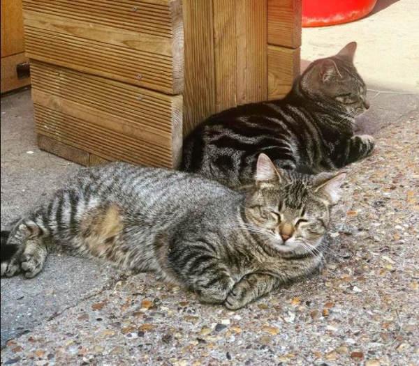 Farm cats Gracie & Mr Grey snoozing