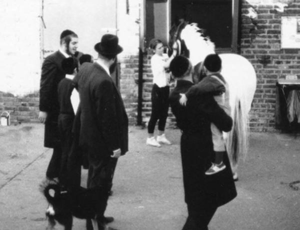 Community group watching grooming of a horse