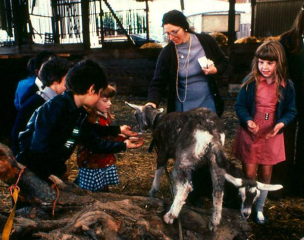 Children on educational visit meet the goats