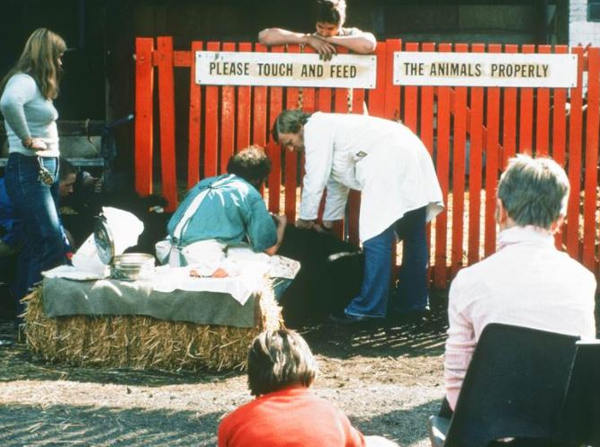 Farm vet examining an animal