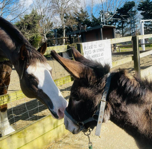 Horse Champ and Donkey Dora morning greetings