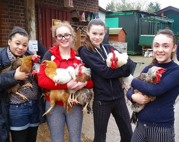 Young Farmers holding the gathered hens