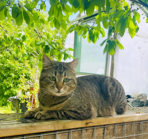 Farm cat Gracie resting on a fence