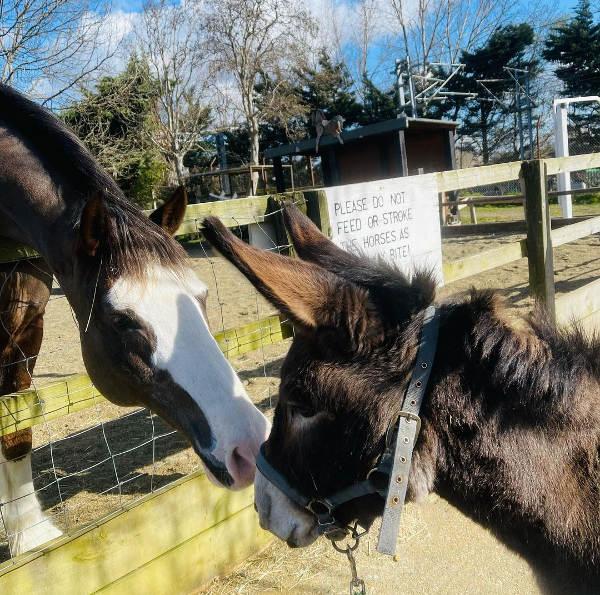 Farm horse champion and donkey greet