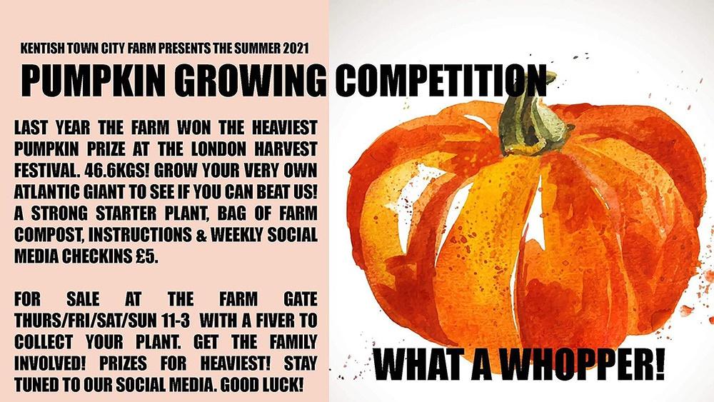 Pumpkin Growing Competition. Summer 2021