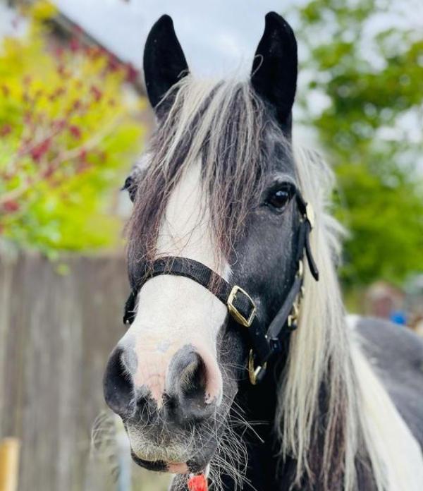 Farm horse named Murphy